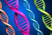 Triple DNA